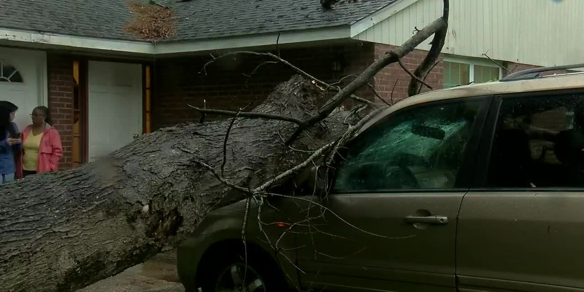 Tree smashes Myrtle Beach family's car moments before they left house