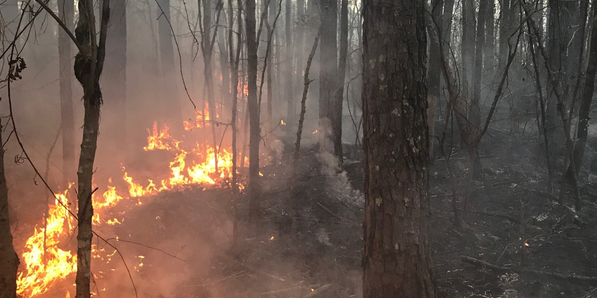 Horry County Fire and Rescue respond to four-acre brush fire