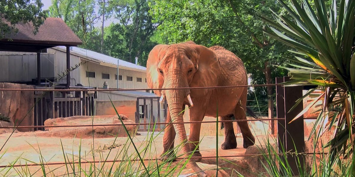 Elephant dies unexpectedly at Riverbanks Zoo