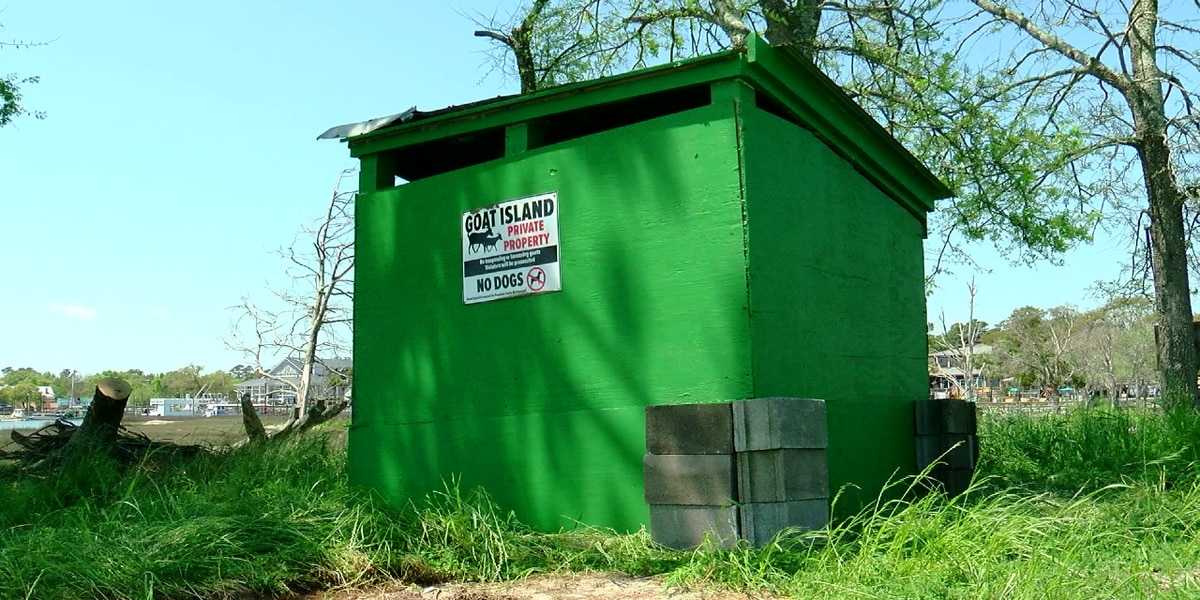 Murrells Inlet's goats set to return to Goat Island with refurbished shelter