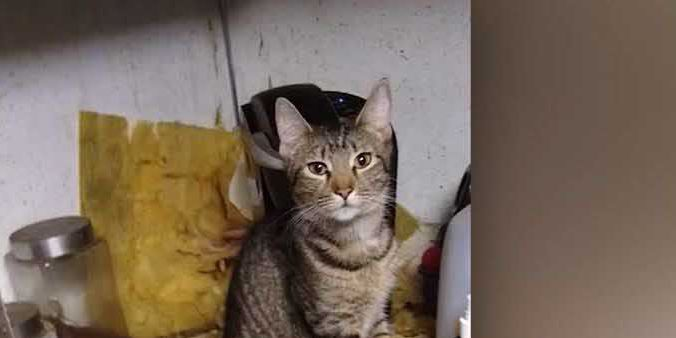 50 cats and 3 dogs rescued from 'filthy' home; family living there also removed