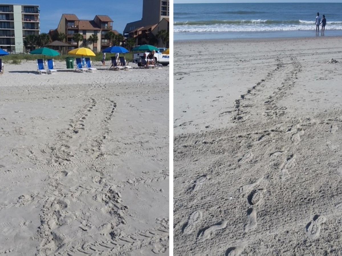 Myrtle Beach asks public not to interfere with sea turtles during nesting season