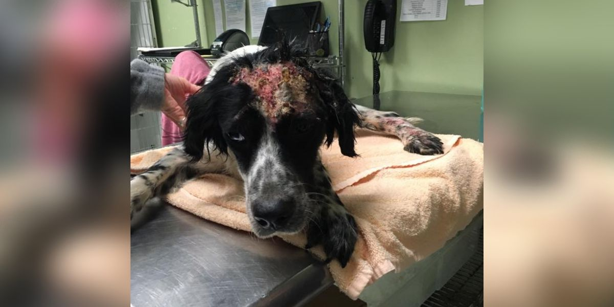 Georgetown animal shelter cares for dog burned by chemicals