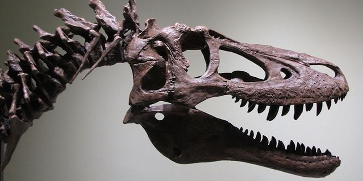 Baby T. rex fossil up for auction on eBay