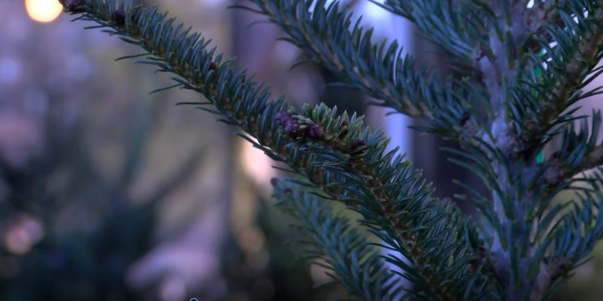 Christmas tree lots see shortage of trees; demand steady despite pandemic