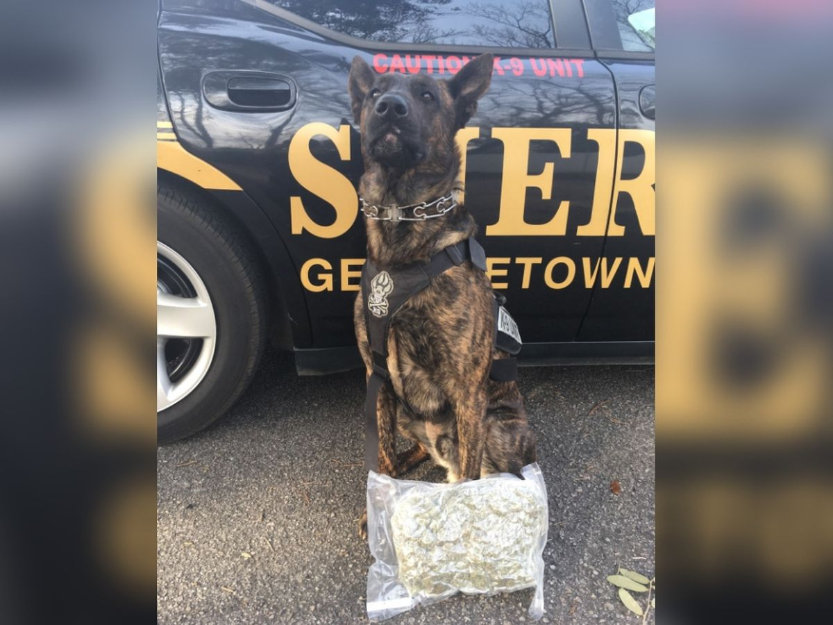 Drug dog sniffs out vacuum sealed bag of marijuana