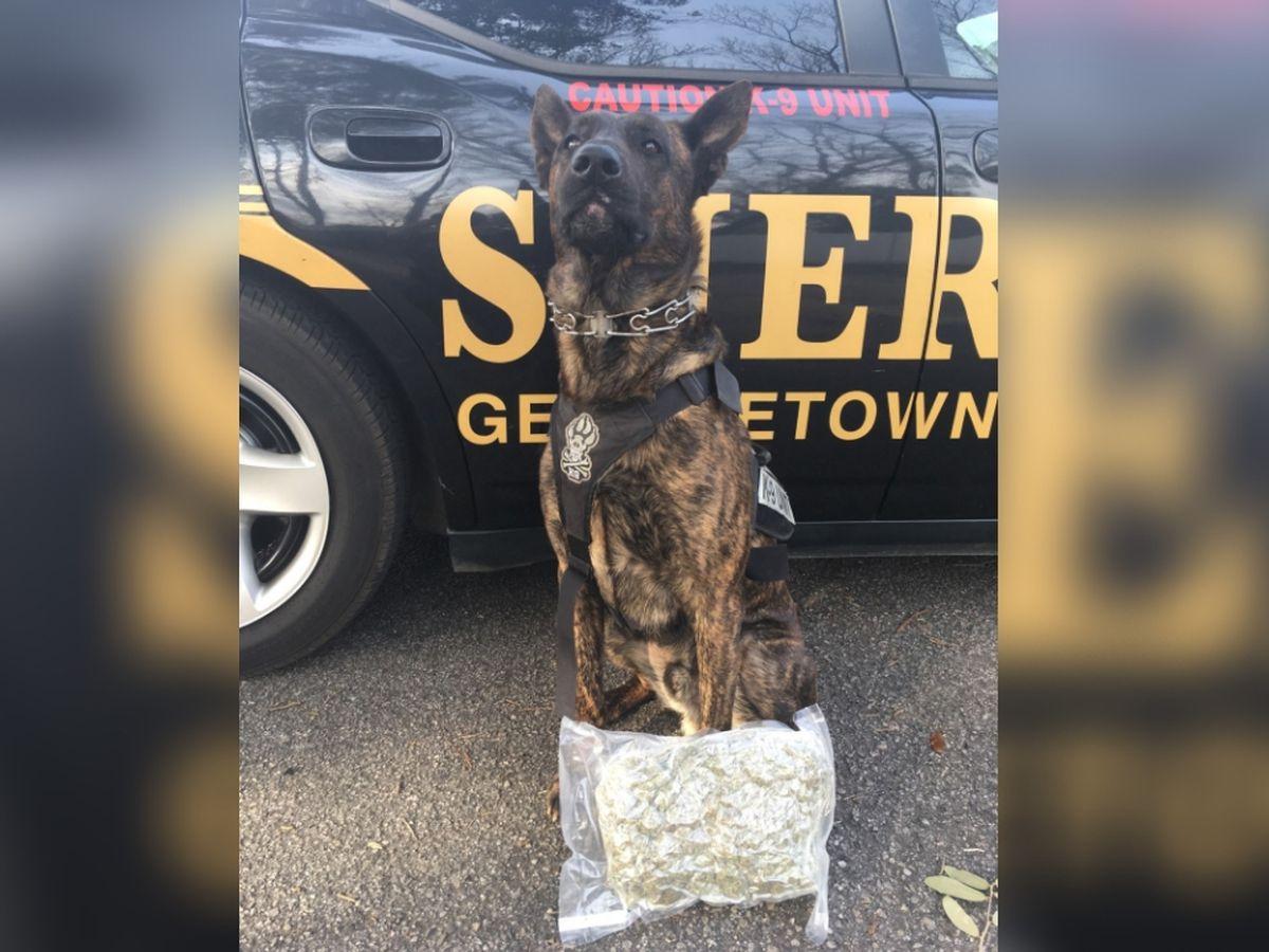 Drug dog sniffs out vacuum sealed bag of marijuana