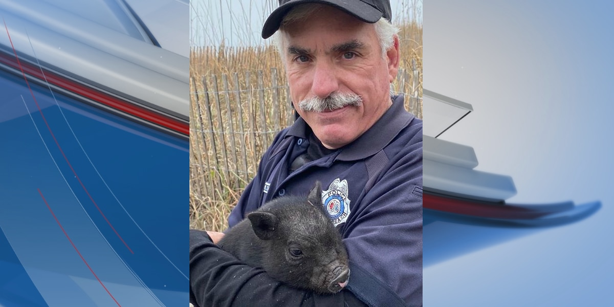 Myrtle Beach officers capture lost mini-pig, working to reunite pet with family
