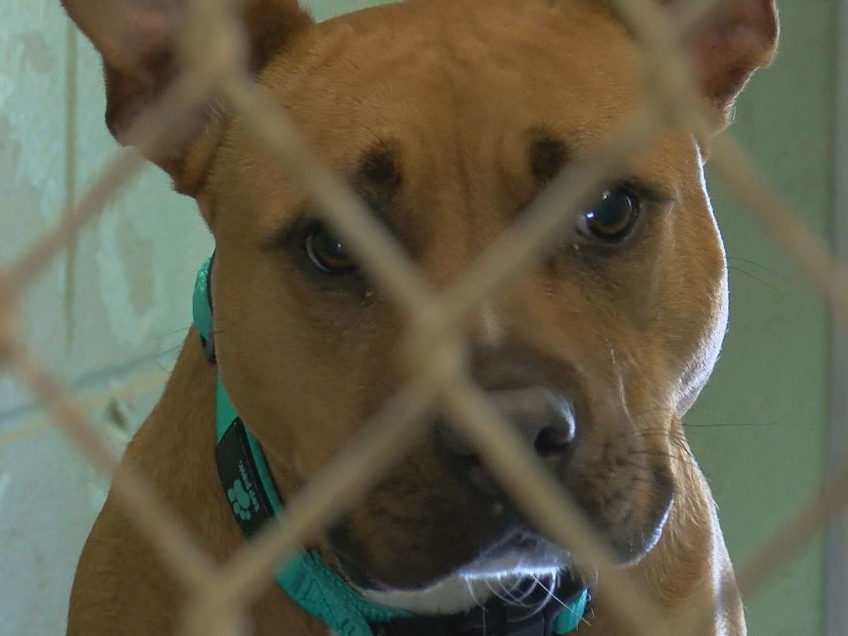 It's Your Money: Horry County Animal Care Center benefits from Community Benefit Fund