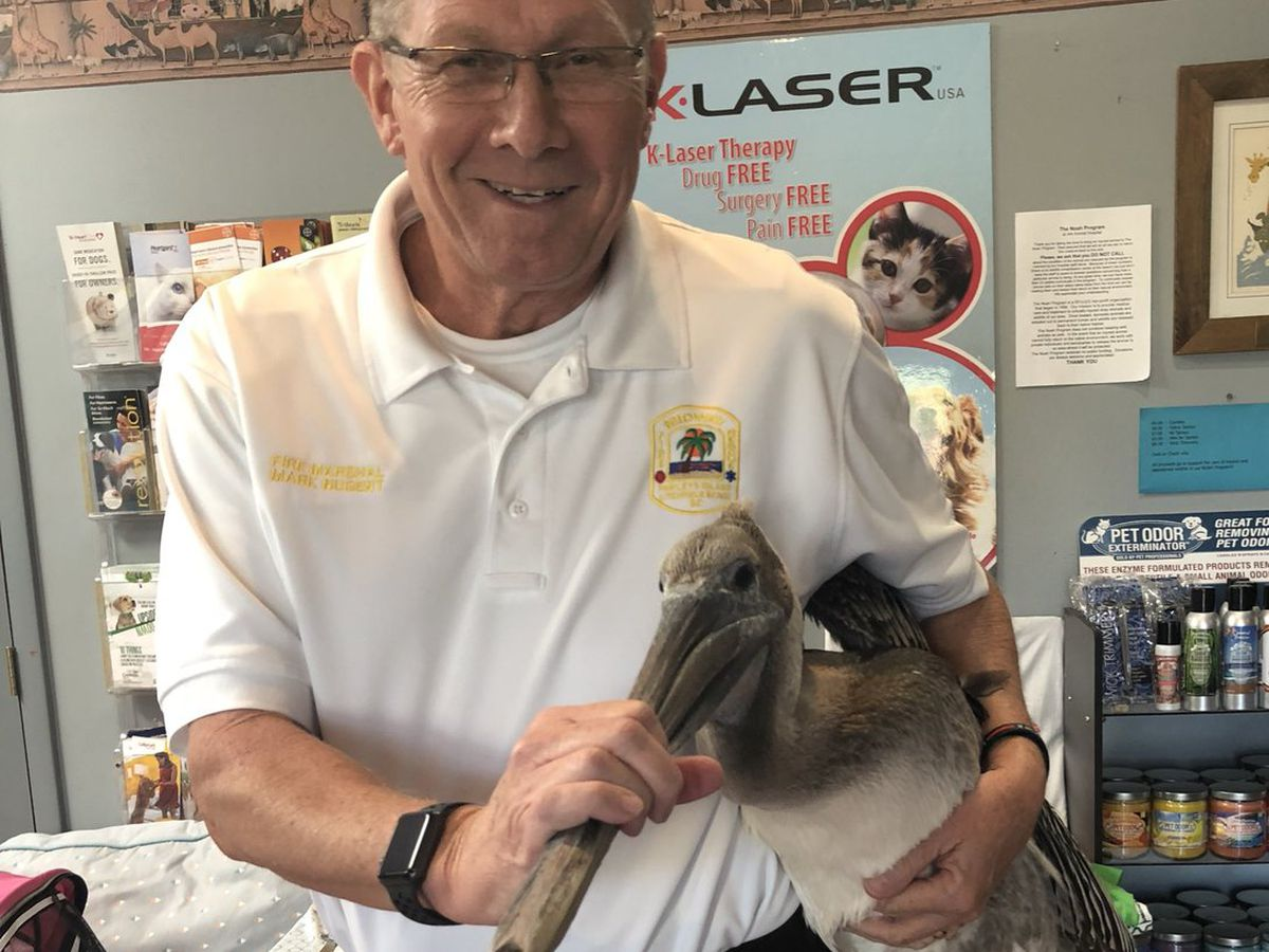 Injured pelican rescued in Pawleys Island