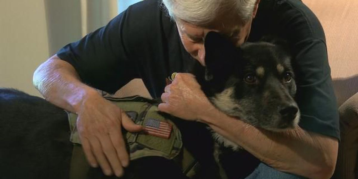 Embrace A Veteran: Vietnam vet reflects on near-death experience, how rescue dog gives him hope